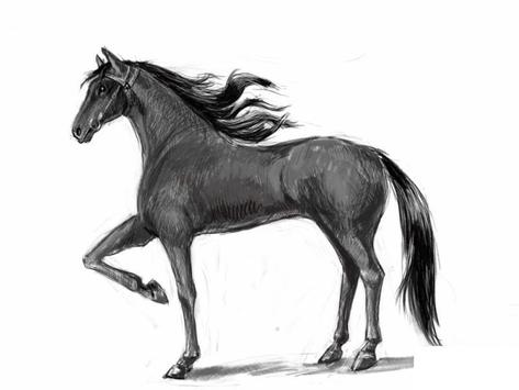 How to draw a horse screenshot 7