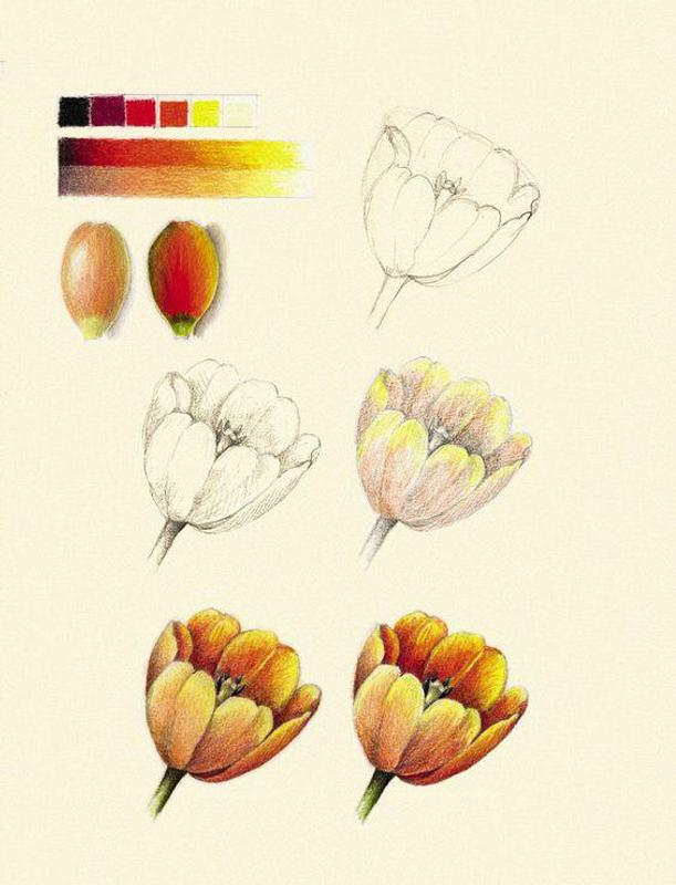 Como Dibujar Flores Realistas For Android Apk Download