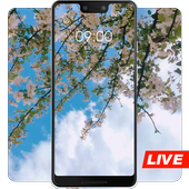 Spring cherry blossom bloom live wallpaper icon