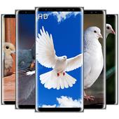صور و خلفيات الحمام للشاشة HD - بدون أنترنت icon