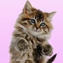 가르랑 고양이 라이브 Wallp 춤을 추고 APK