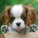 핥는 개, 핥는 고양이, 화면을 핥는 동물 APK