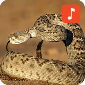 Rattlesnake Sound Effects for Android - APK Download