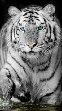 White Tiger Live Wallpaper screenshot 3