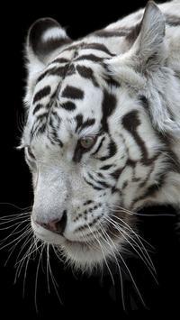 White Tiger Wallpapers screenshot 3