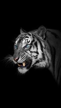 White Tiger Wallpapers poster