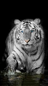 White Tiger Wallpapers screenshot 1