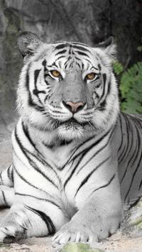 White Tiger Live Wallpaper screenshot 2