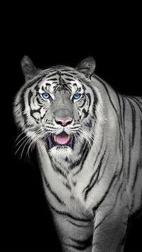 White Tiger Wallpapers screenshot 2
