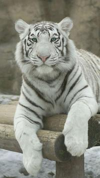 White Tiger Wallpapers screenshot 4