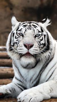 White Tiger Wallpapers screenshot 5