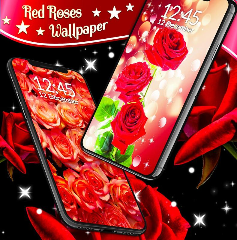 Red Rose Live Wallpaper For Android Apk Download