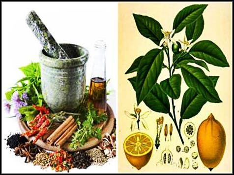 Natural and Effective Home Remedies screenshot 2