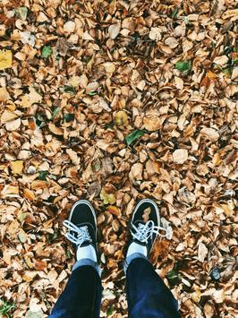 Autumn wallpapers screenshot 2