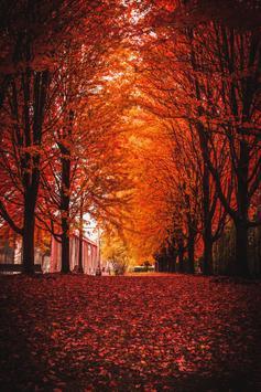 Autumn wallpapers screenshot 6