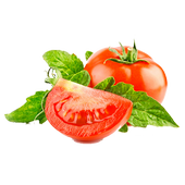2.4.8 DOWNLOADER TOMATO YOUTUBE TÉLÉCHARGER VIDEO