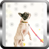 tips for training puppies icon