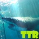sharks live wallpapers APK