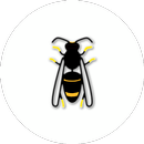 Asian Hornet Watch APK Android